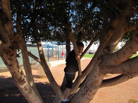 8a - tree climbing.JPG