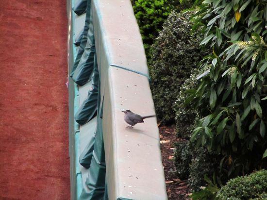7 - lost birdie.JPG